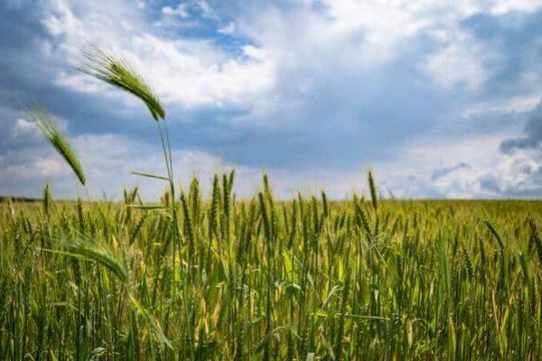 Tecno Edil Valeggio - Noleggio attrezzature per l agricoltura a Verona a provincia